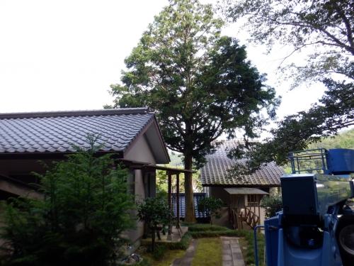 家周囲の木伐採