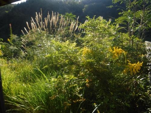 空家の管理草刈