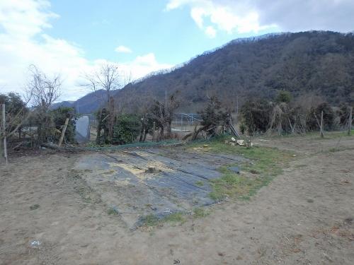 畑の梨の木伐採処分